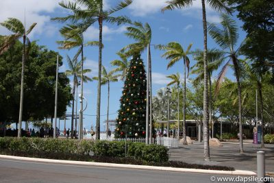 Cairns and the Surrounding Area Christmas tree