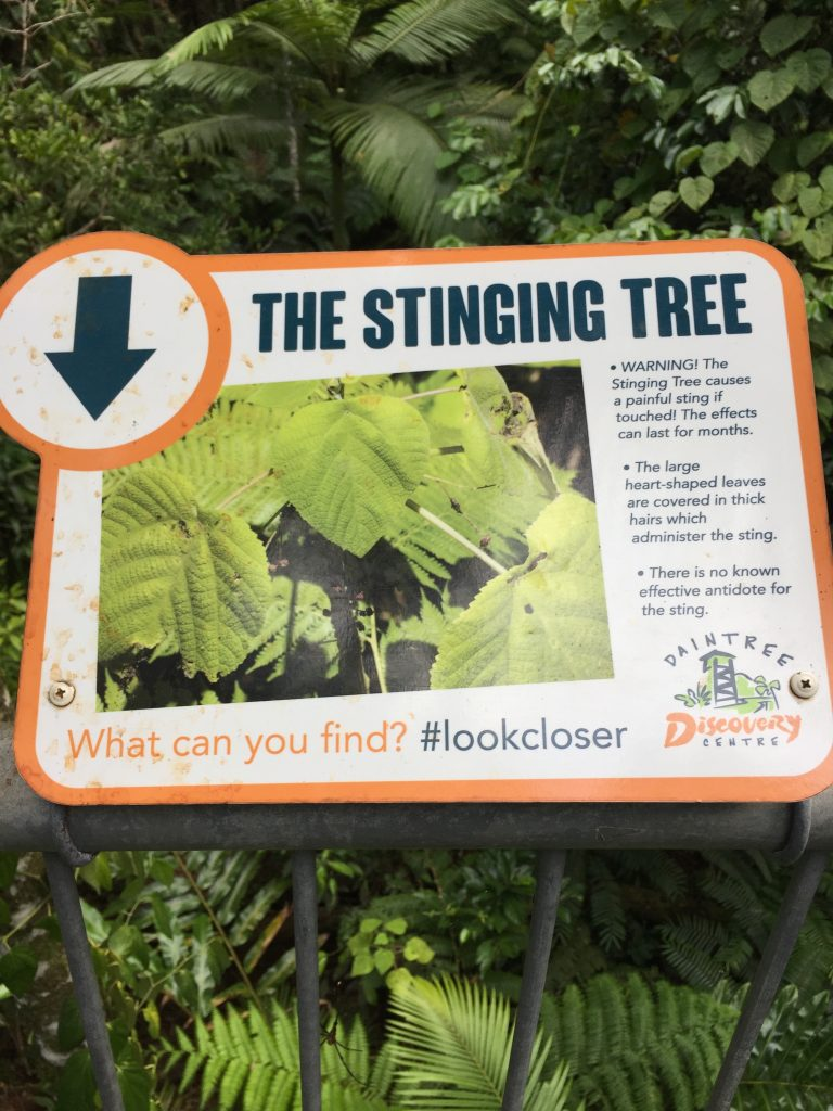 the Stinging Tree information sign in the Daintree Rainforest Discovery Centre