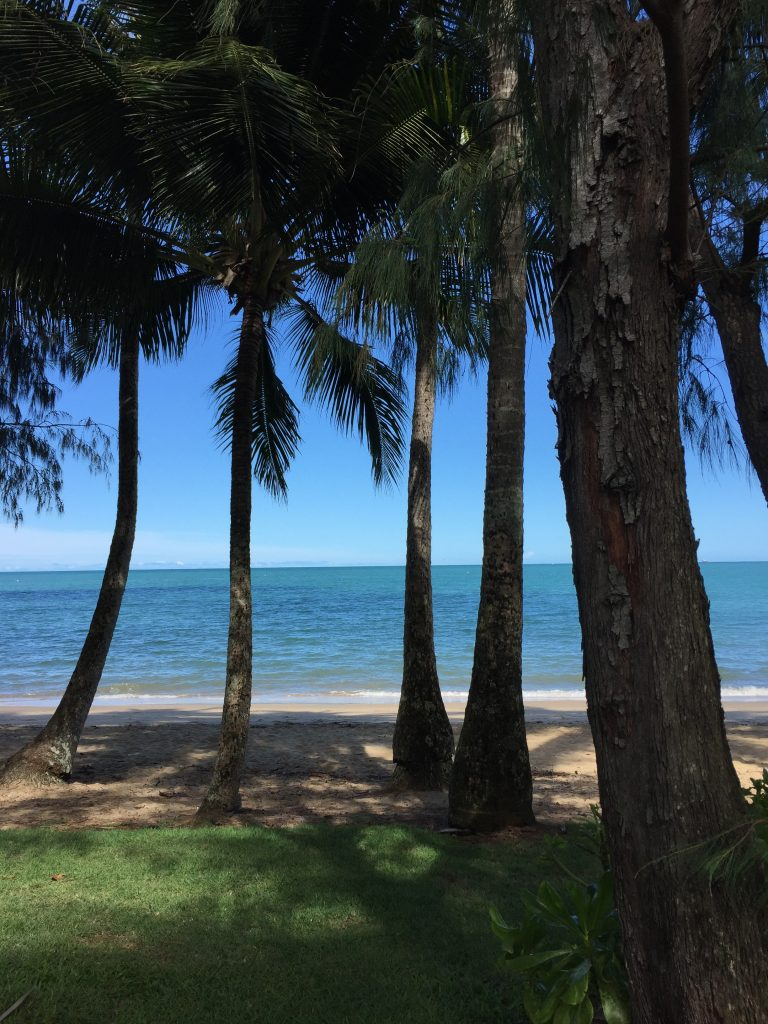 view of the beach and ocean through the trees in Palm Cove