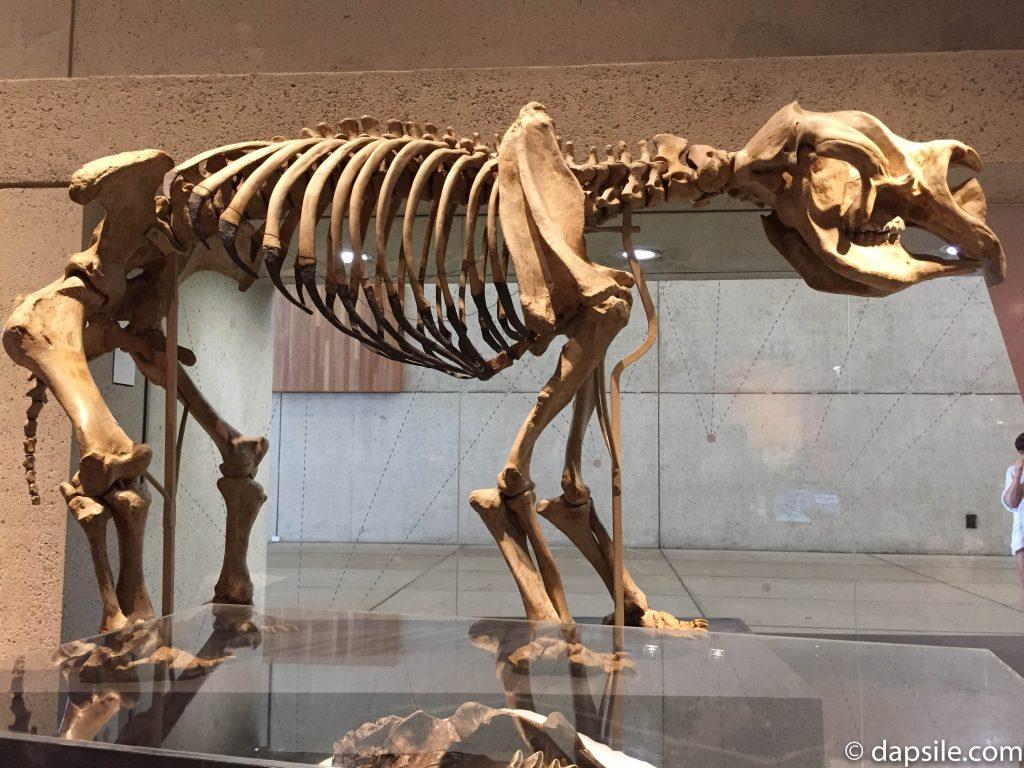 Dinosaur Bones in Queensland Museum and Sciencentre