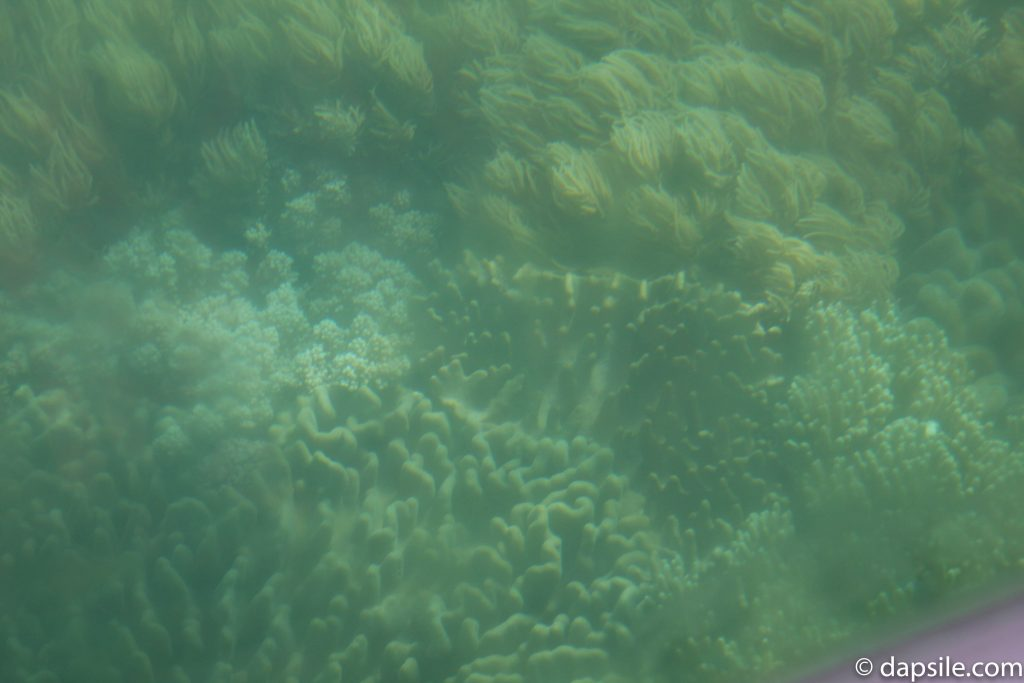 Great Barrier Reef from Glass Bottom Boat Tour from Fitzroy Island Resort 5