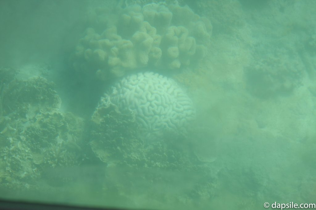 Great Barrier Reef looks like brains from Glass Bottom Boat Tour from Fitzroy Island Resort 6