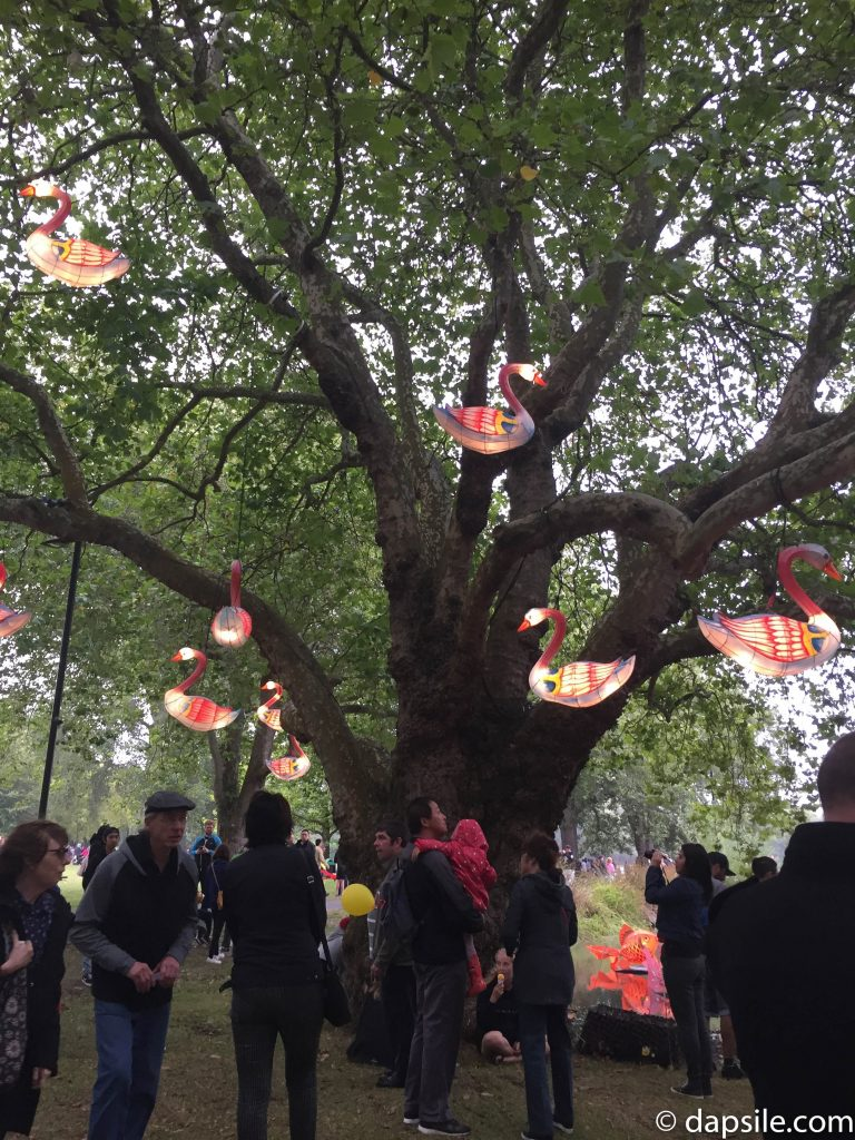 Swan Lanterns in a Tree at Christchurch Lantern Festival