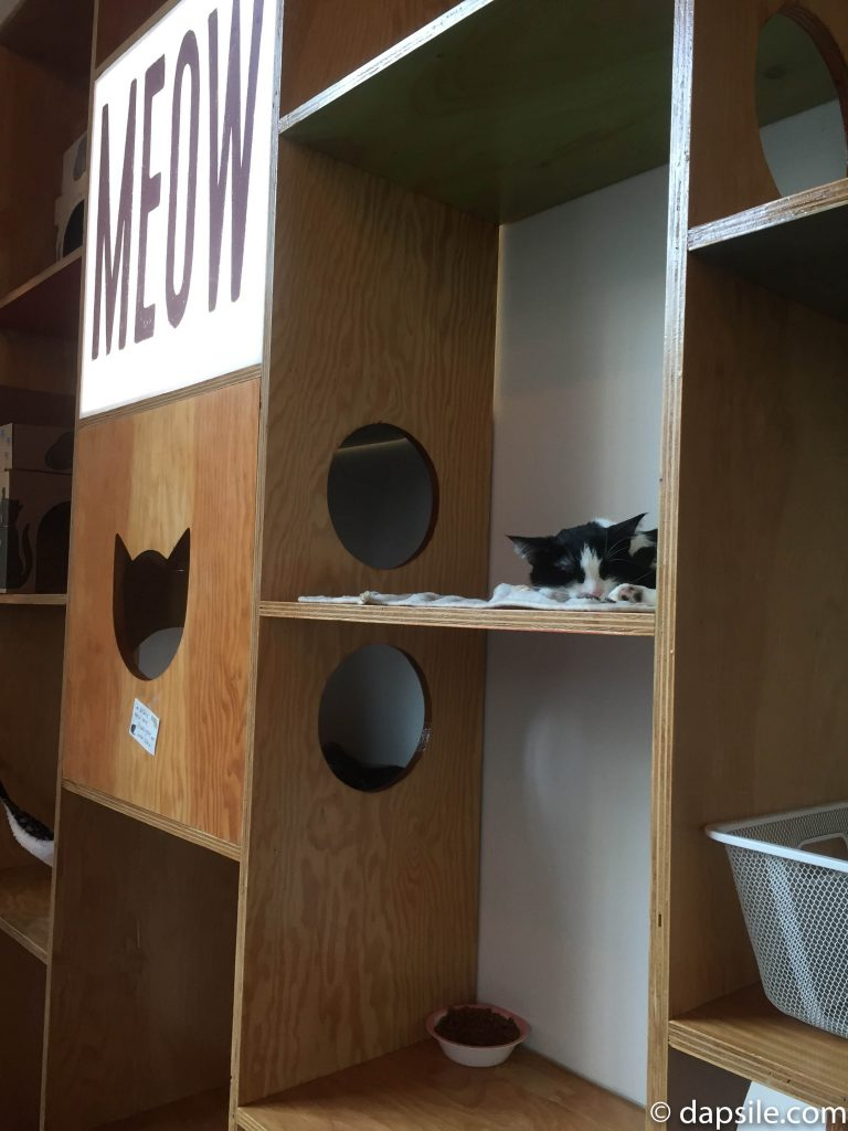 closeup of a cat resting in one of the many cubbies