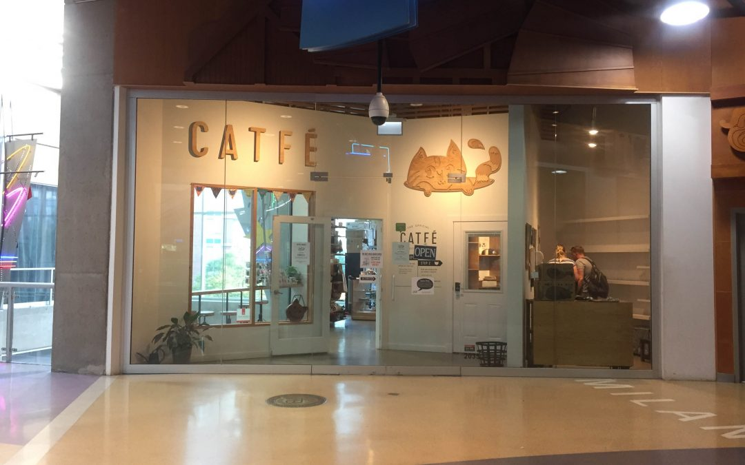 Catfe cat cafe entrance in the International Village Mall
