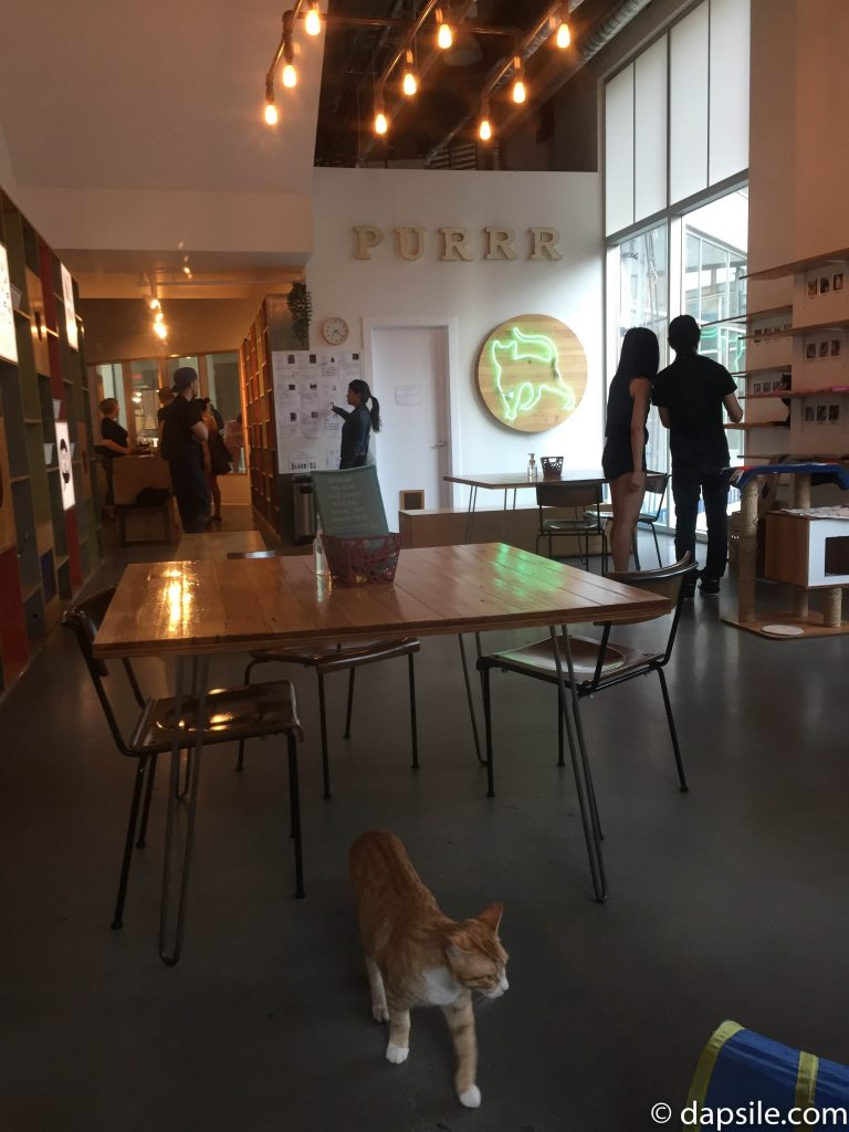 Inside Catfe cat cafe Main Cat Room with people and cats