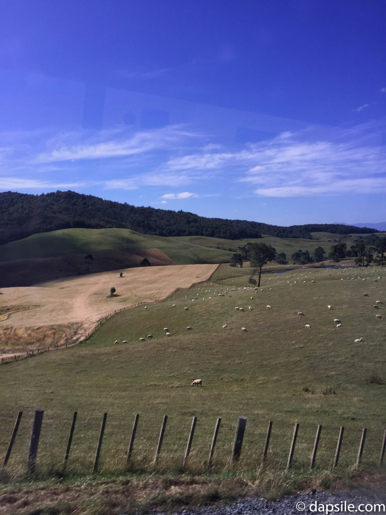 Rolling Hills Full of Sheep while the on Hobbiton Shuttle Bus